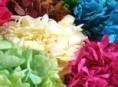 imagen Flores secas