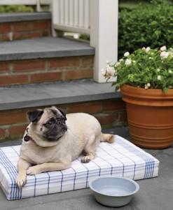 almohadon-facil-para-tus-mascotas