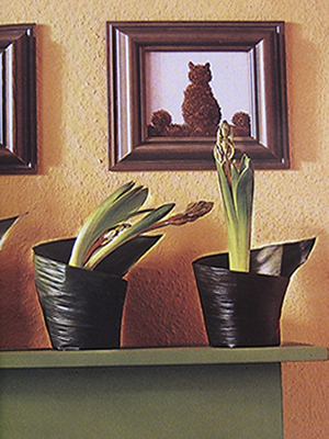 Macetas, un jardín en el interior 2