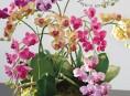 imagen Manualidades con flores: un centro de mesa con orquídeas