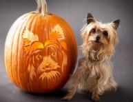 imagen Manualidades de Halloween: tu perro tallado en calabazas