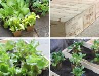 imagen Arma tu propio jardín en casa