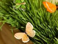 imagen Centro de mesa natural y con mariposas de papel