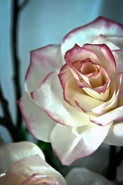 Rosas con filtros de café