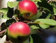 imagen Mascarilla facial con manzana