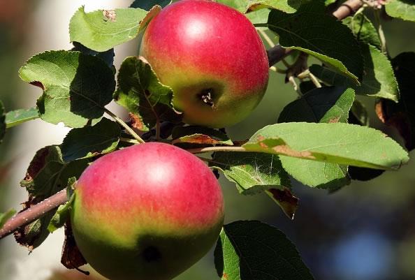 Mascarilla de manzanas