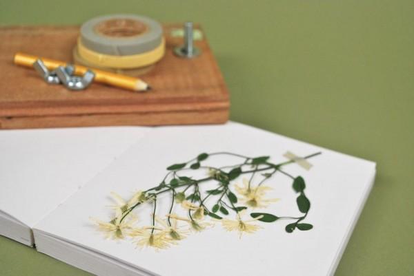 Prensa para secar flores 3