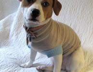 imagen Un abrigo para tu mascota