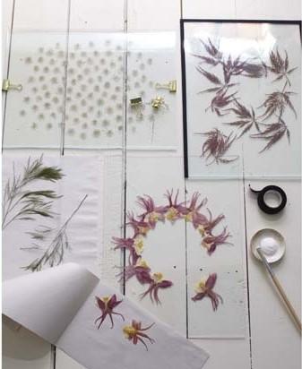 Flores y plantas prensadas 2