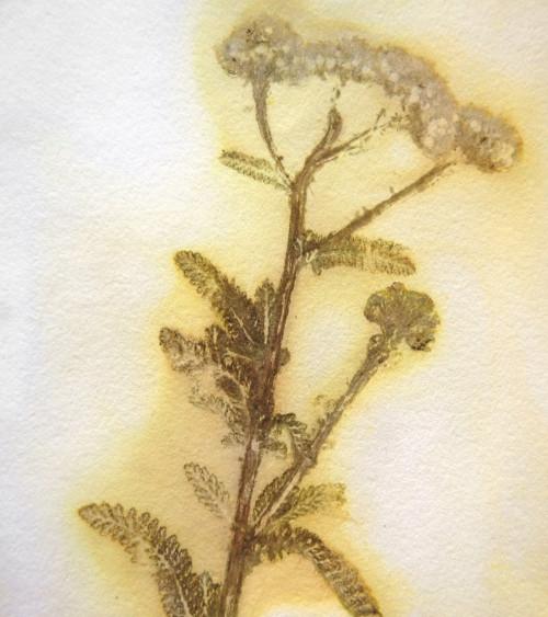 Ecoimpresiones florales 7