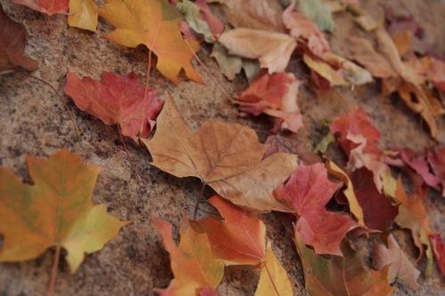 como-conservar-hojas-secas-con-parafina-01