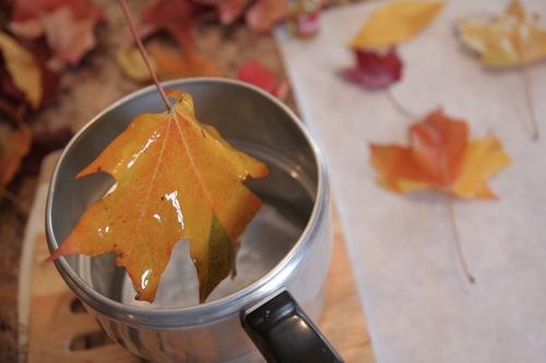 Cmo conservar hojas secas con parafina Gua de MANUALIDADES