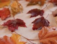 imagen Cómo conservar hojas secas con parafina
