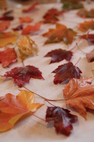 como-conservar-hojas-secas-con-parafina-04