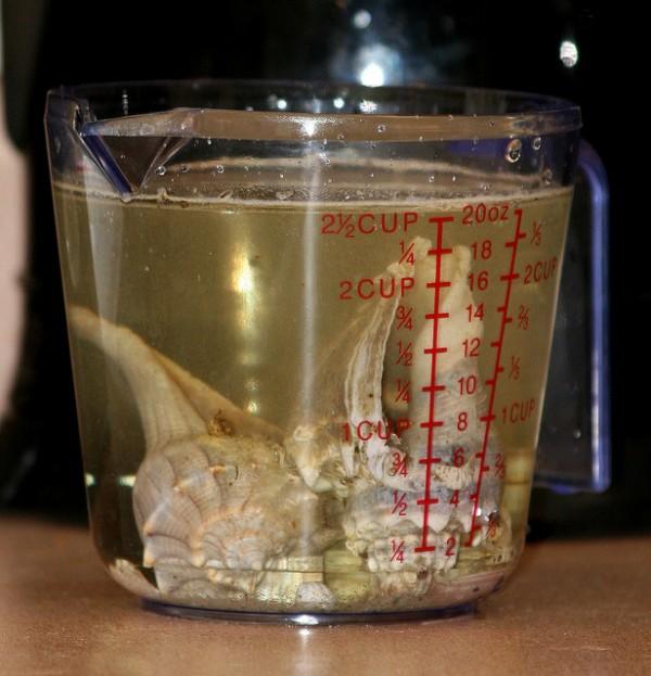 Limpiar conchas marinas 2