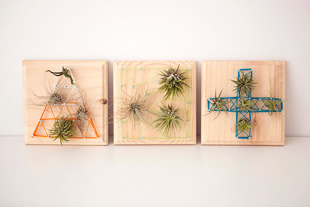 Cuadros con plantas a reas gu a de manualidades for Air plant wall art
