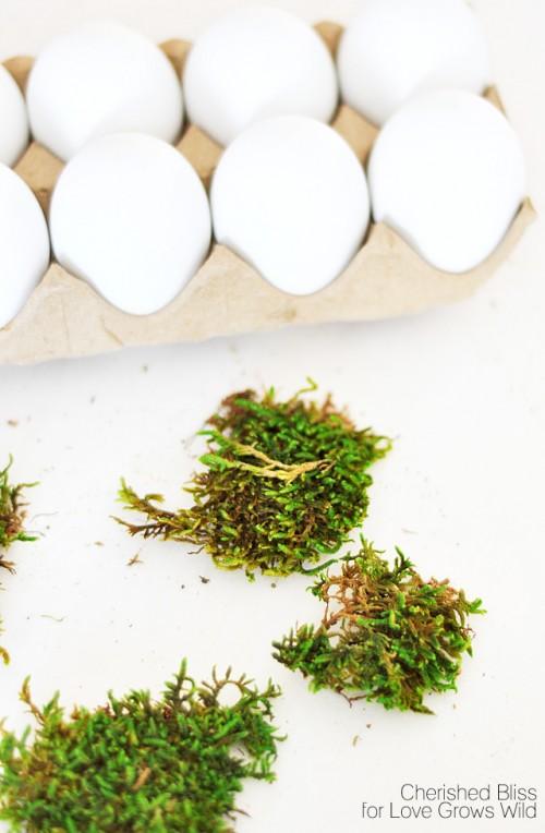 Huevos con musgo 2