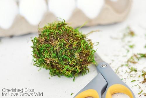 Huevos con musgo 3