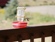 imagen Simple y fácil alimentador para colibríes