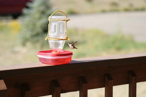 Alimentador de aves 1