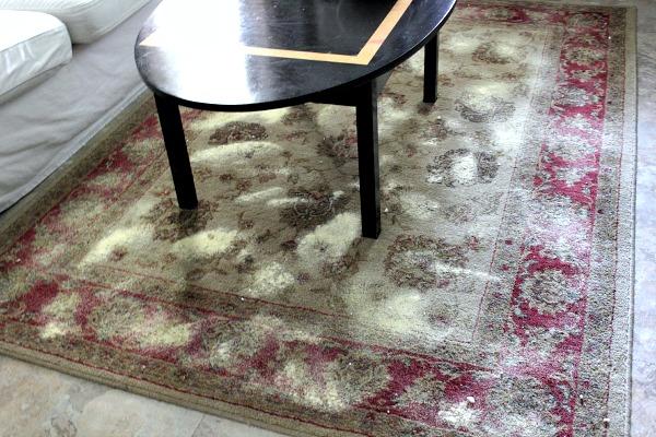 Limpiador DIY de alfombras 4
