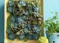 imagen Haz un artístico jardín vertical de suculentas