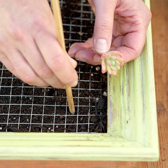 hacer-un-artistico-jardin-vertical-de-suculentas-09