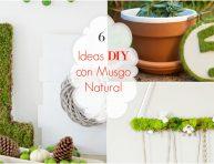 imagen 6 propuestas DIY con musgo natural increíbles