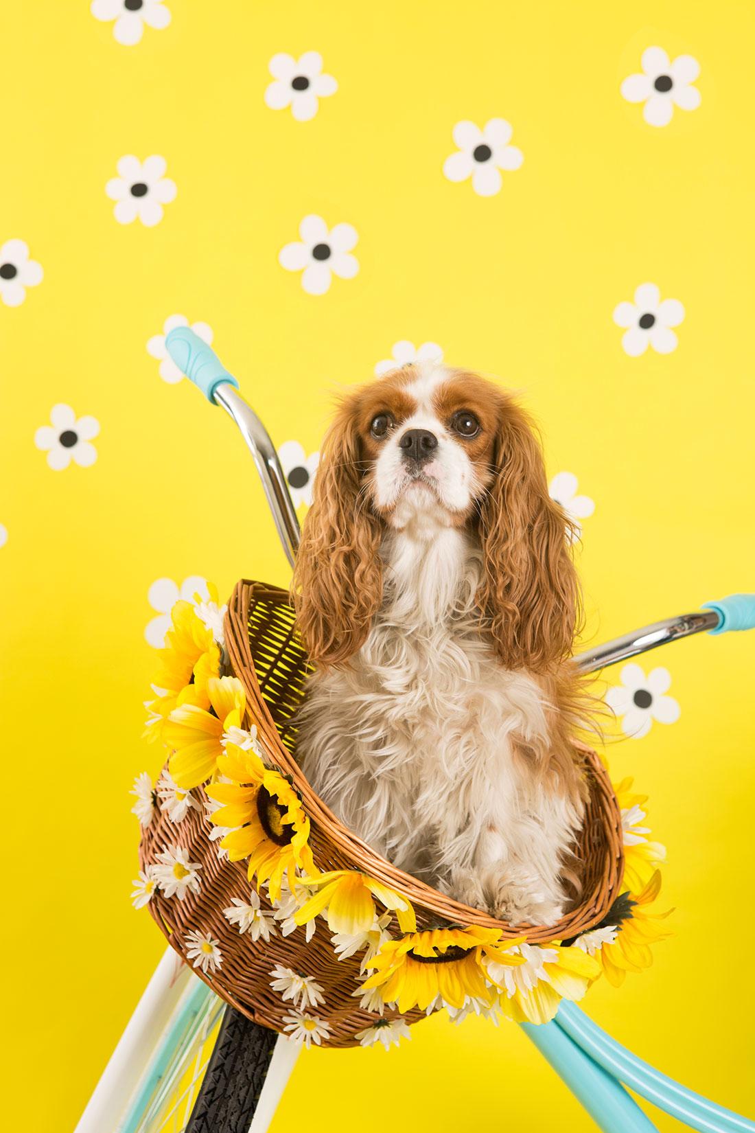 decora-una-cesta-con-flores-para-tu-bicicleta-01