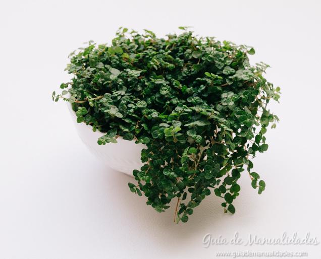 mini-jardin-4