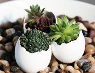 imagen Mini jardineras con cáscaras de huevos